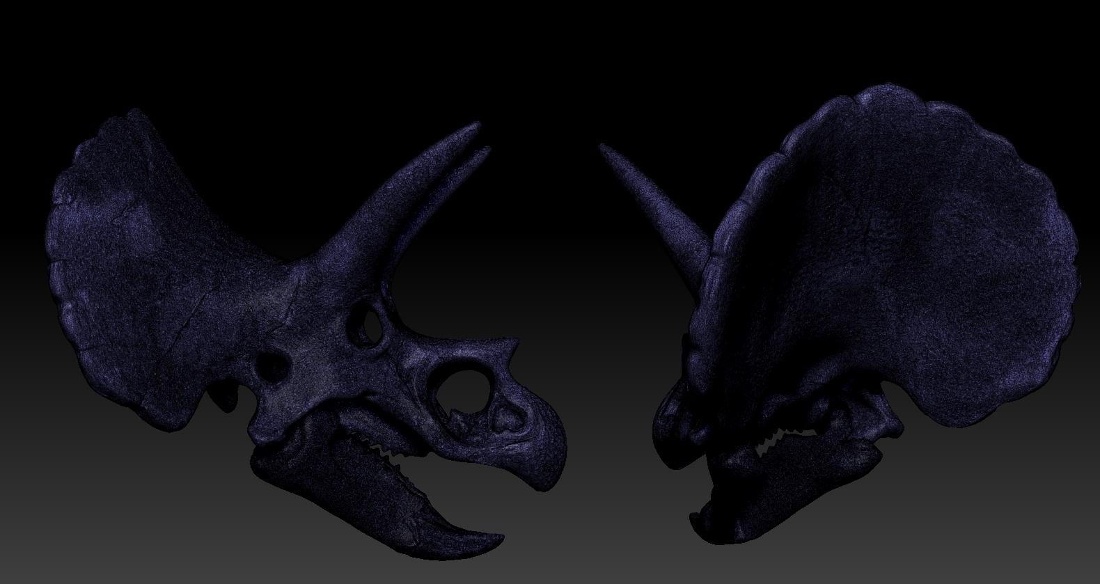 D1.jpg Download free OBJ file Triceratops Skull • 3D printable model, Dynastinae