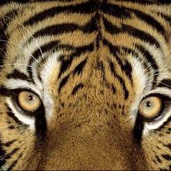 Download 3D printing models tiger-lithopane, dimbala