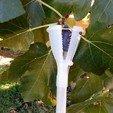 Download 3D printer files Fig pickings, Algernon