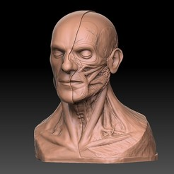 Download 3D printer designs Human Head Artistic Anatomy 3D Print, diegoripp