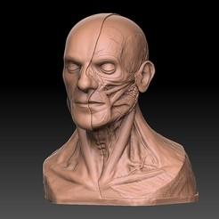 Archivos 3D Cabeza humana Anatomía artística Impresión en 3D, diegoripp