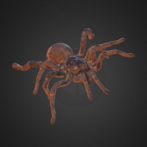 Free 3D print files King Baboon Tarantula, AucklandMuseum