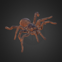 Download free 3D printer model King Baboon Tarantula, AucklandMuseum
