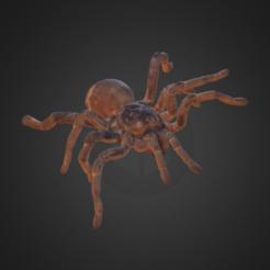Objeto 3D Tarantula del Rey Babuino gratis, AucklandMuseum