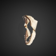 Download free 3D model White Shark Jaw, AucklandMuseum
