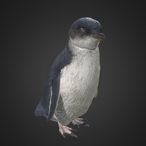 Download free 3D printer designs Little Blue Penguin / Kororā, AucklandMuseum
