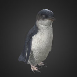 Capture d'écran 2017-12-14 à 15.17.09.png Download free OBJ file Little Blue Penguin / Kororā • 3D print design, AucklandMuseum