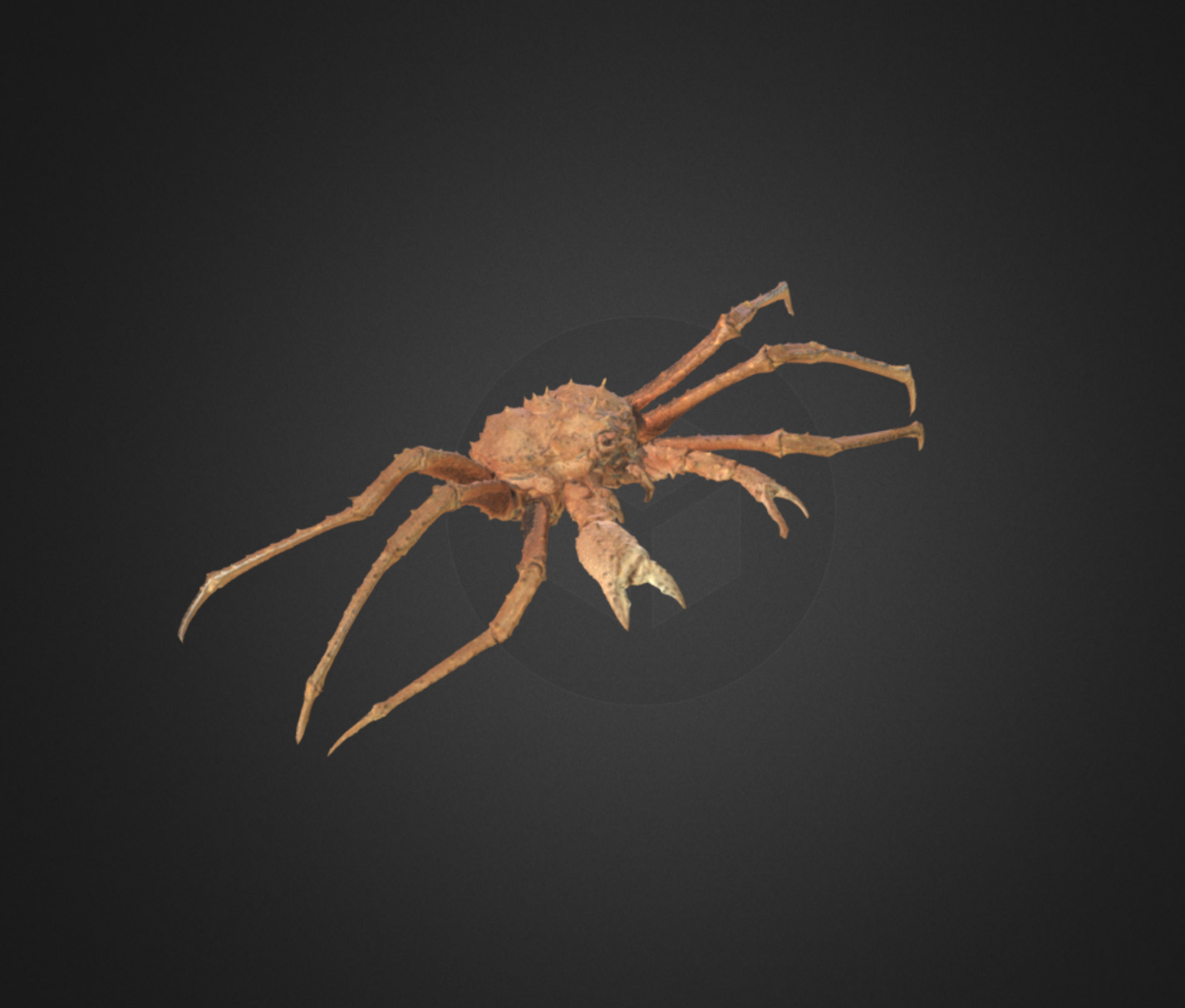 Capture d'écran 2017-12-14 à 15.50.46.png Download free OBJ file King Crab • 3D printer model, AucklandMuseum