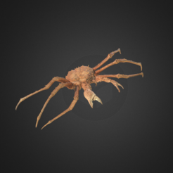 Download free STL files King Crab, AucklandMuseum