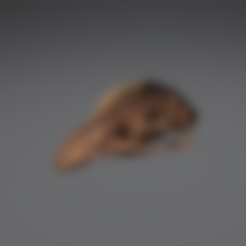 Download free 3D printer model Moa Skull - Auckland Museum Collection, AucklandMuseum