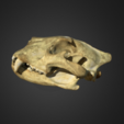 Download free STL file Lion Skull, AucklandMuseum