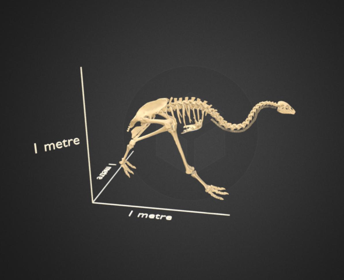 Capture d'écran 2017-12-14 à 16.37.12.png Télécharger fichier STL gratuit Petit squelette de moa de brousse • Design pour impression 3D, AucklandMuseum