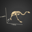 Free 3D printer model Little bush moa skeleton, AucklandMuseum