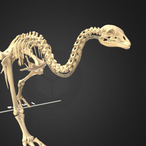Capture d'écran 2017-12-14 à 16.37.24.png Télécharger fichier STL gratuit Petit squelette de moa de brousse • Design pour impression 3D, AucklandMuseum