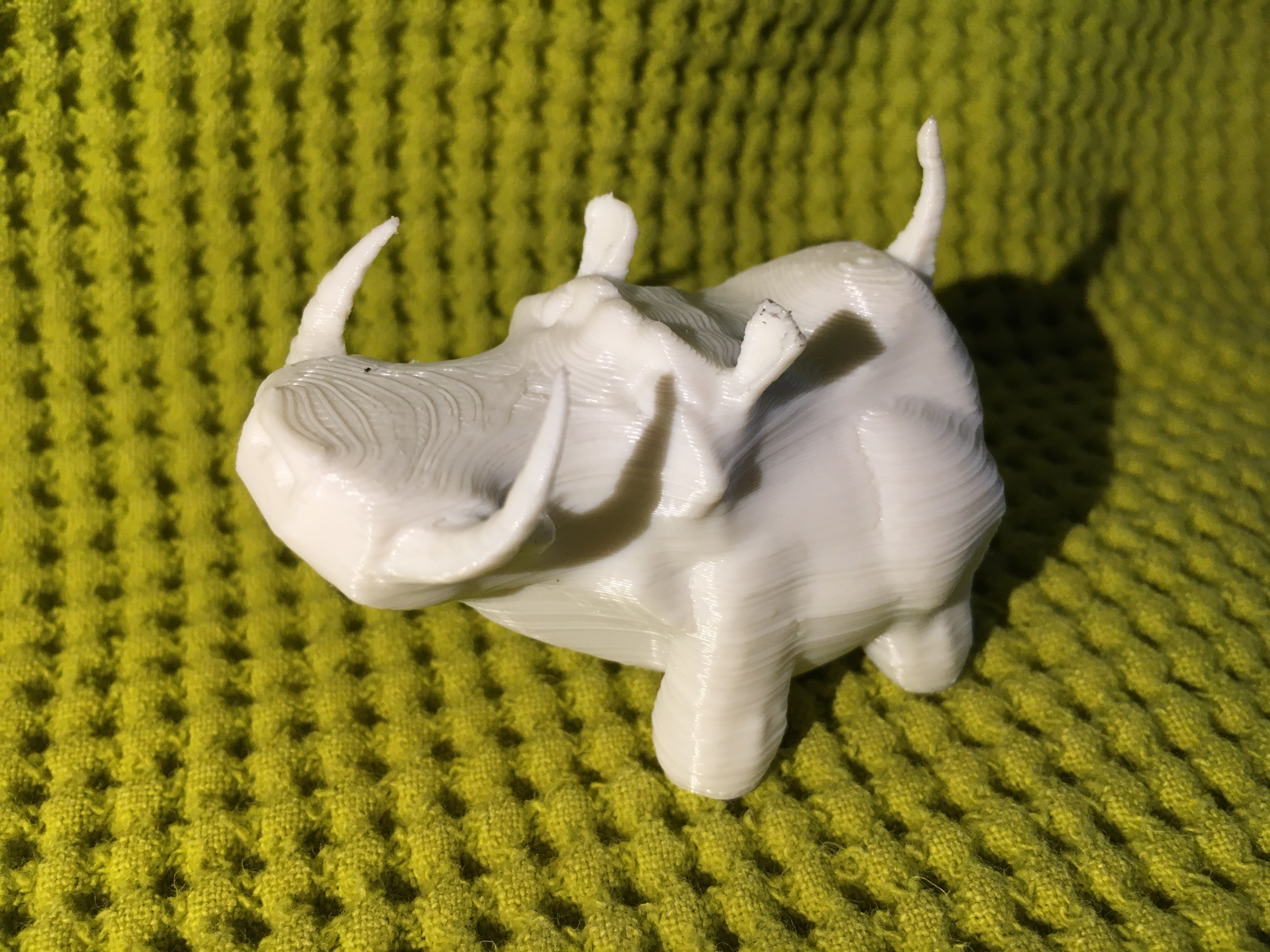 IMG_4430.JPG Download free STL file Warthy • Object to 3D print, Stenoxp