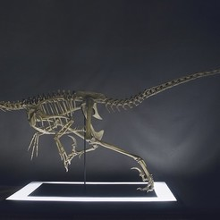 3d printer model Life-size Vélociraptor skeleton Part01/05, Inhuman_species