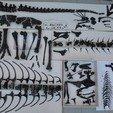 STL files Life size baby T-rex skeleton - Part 06/10, Inhuman_species