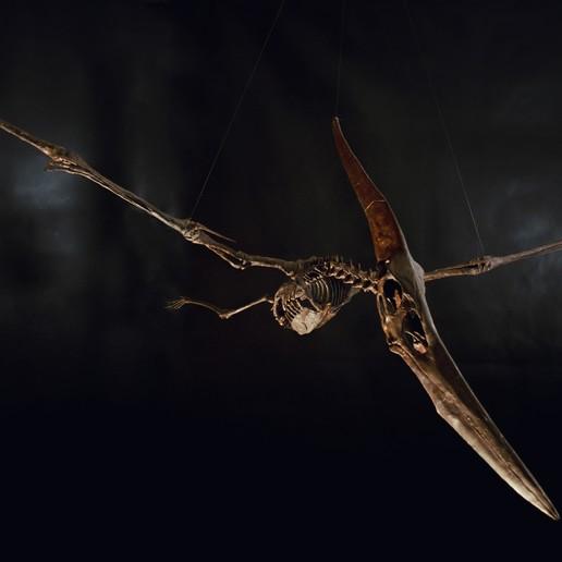 Descargar modelo 3D Esqueleto de pteranodon, Inhuman_species