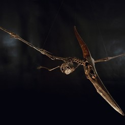 Download STL file Pteranodon skeleton, Inhuman_species