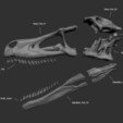Download free 3D printing templates Skeleton of Vélociraptor real size Part05/05, Inhuman_species