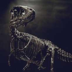 Modèle 3D Life size baby T-rex skeleton - Part 01/10, Inhuman_species