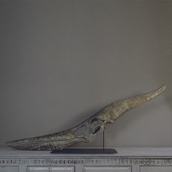 Download 3D printing designs Pteranodon fossil skull life-size, Inhuman_species