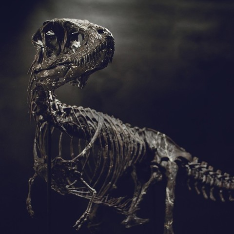 Download 3D printing templates Life size baby T-rex skeleton - Part 06/10, Inhuman_species
