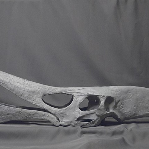 Pteranodon03.jpg Download STL file Pteranodon fossil skull life-size • 3D printer model, Inhuman_species