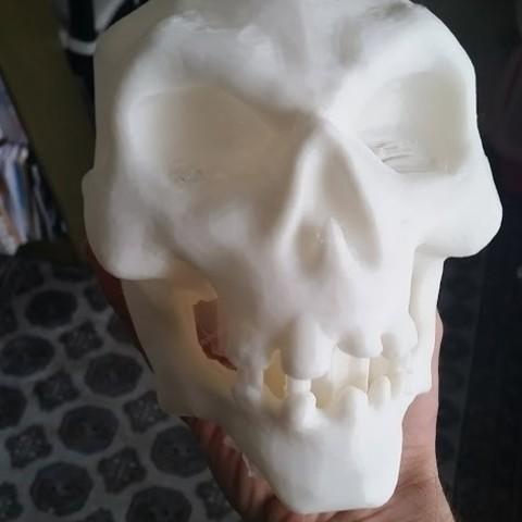Archivos 3D Cráneo de caricatura, twyghyde