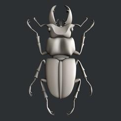 Download STL 3d models bug, burcel