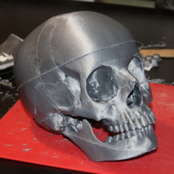 Free STL Human skull, anatomically correct - for smaller printers, firebird