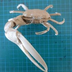 Free 3D printer model Fiddler Crab, tirawa