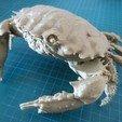 Download free OBJ file Dark Finger Reef Crab • 3D printing design, tirawa
