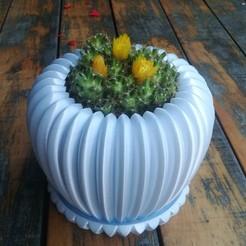 Descargar archivos 3D plantador de cactus, tom4z