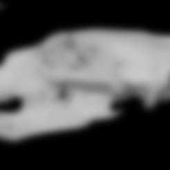 Free 3d printer files Ursus maritimus, Polar Bear skull, MadScientist3D