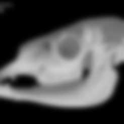 Lama.stl Download free STL file Lama glama, Llama skull • 3D print object, MadScientist3D