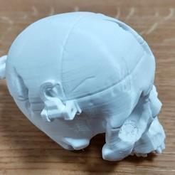 Descargar archivo STL gratis Boneheads: Skull Box w/ Brain - via 3DKitbash.com • Modelo para la impresión en 3D, CharlesSmith