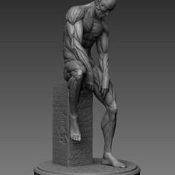 Anatomy05.jpg Download STL file Human Anatomy art • 3D print design, numfreedom