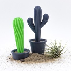 d56fd055985daf35e1c40e5b1561d861_1446490241481_NMD000201-213_@2x.jpg Download free STL file Cacti with Pots • Template to 3D print, Hom3d