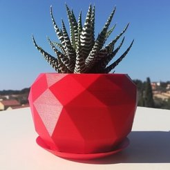 Free 3D printer model Succulent planter low poly, ernestmocassin