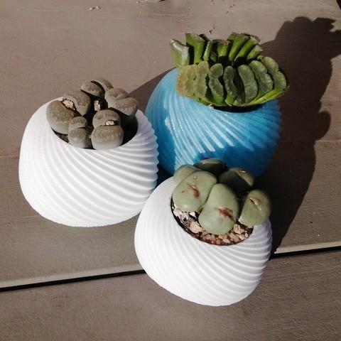 Free 3D printer files Succulent planter, ernestmocassin