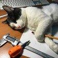 IMG_3586.jpg Download free STL file Screwdriver Сarrot • 3D printer model, perinski