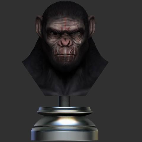 12.JPG Download OBJ file Koba Monkey • 3D print model, Bstar3Dart