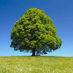 p'tit'arbre.jpg Download free STL file Little tree • 3D printer design, blinjul
