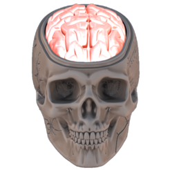 BRAIN.png Download 3MF file Brain (Halloween) • 3D printing template, omni-moulage