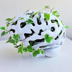 Free 3D printer model Brain Planter, DrFemPop