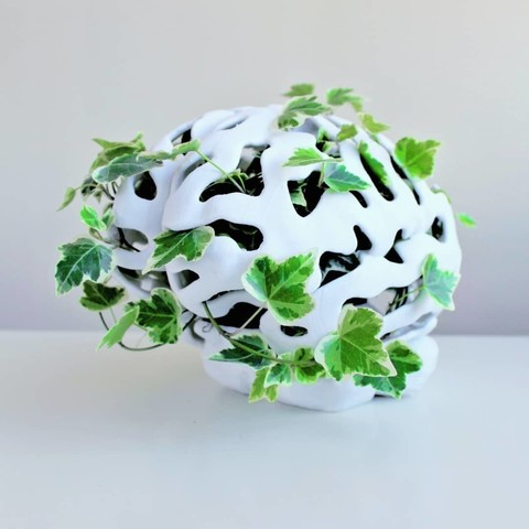 IMG_20190427_185905_926.jpg Télécharger fichier STL gratuit Jardinière de cerveau • Design à imprimer en 3D, DrFemPop
