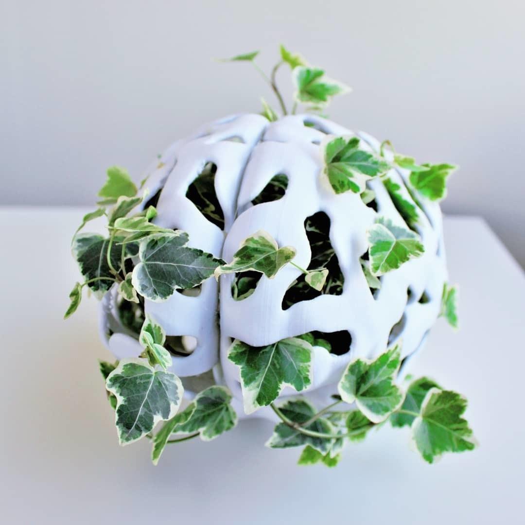 IMG_20190427_185905_916.jpg Télécharger fichier STL gratuit Jardinière de cerveau • Design à imprimer en 3D, DrFemPop
