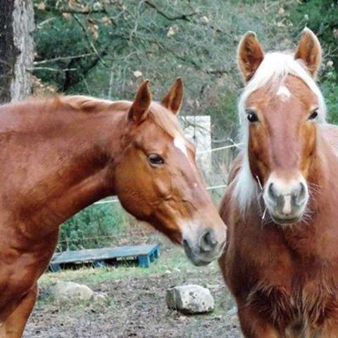 queen et pompon.jpg Download free STL file Mane comb ( horses) • Object to 3D print, ericsud2