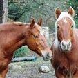 Free 3D printer designs Mane comb ( horses), ericsud2